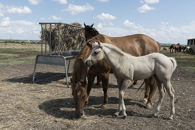 foderhæk høhæk heste