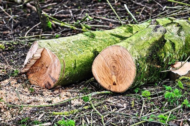 træbeskæring priser